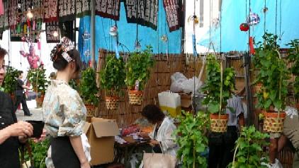 ほおずき市(浅草寺)由来と2015年の開催時間や値段は?